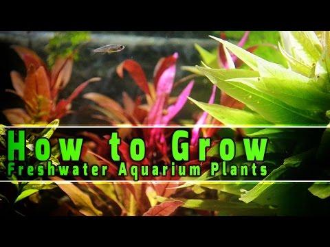 best aquarium plants for betta fish 2019 buyer s guide reviews