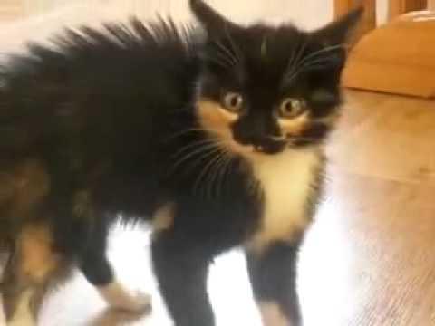 Фото взъерошенного кота