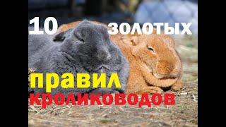 10 Правил в кролиководстве. Ошибки кролиководов.