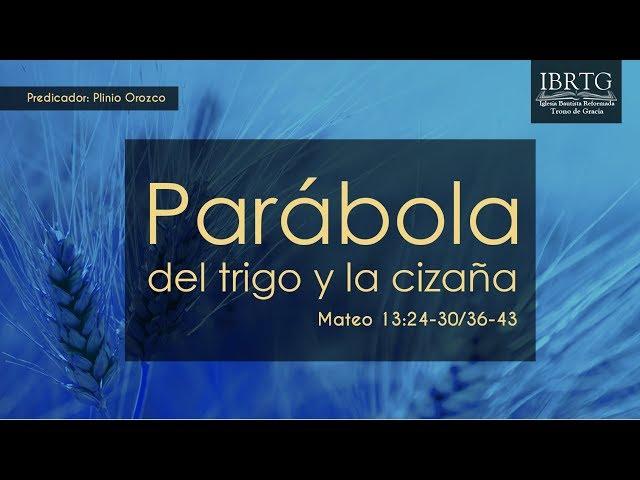 Parabóla del trigo y la cizaña | Ps Plinio R. Orozco