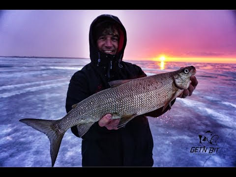 Tips on How to catch Green Bay Whitefish!