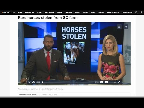 NetPosse.com Media Coverage WCNC Story on Rare Marsh Tacky Horses Stolen from Farm in SC