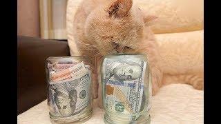 Как сэкономить на содержании кошки