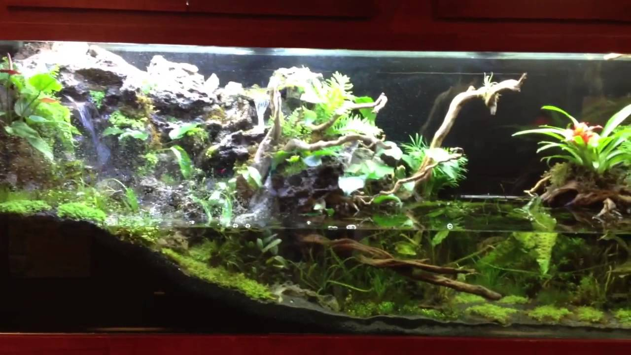 Seachem Monster 265 Paludarium Youtube