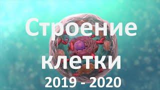 7. Строение клетки (9 или 10-11 класс) - биология, подготовка к ЕГЭ и ОГЭ 2020