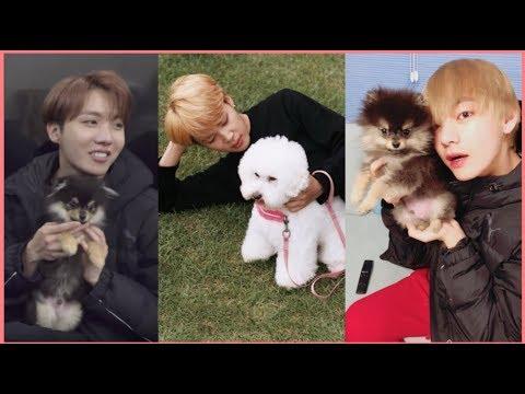 BTS Cute Animals Compilation