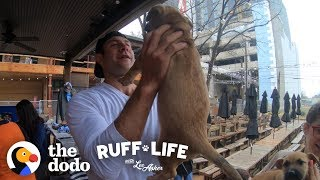 Come Check Out this Extreme Dog Dad | Ruff Life With Lee Asher (Series Trailer)