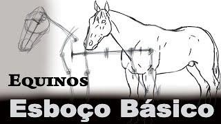 N°1 Equinos Semi Perfil - Esboço e Contorno - Anatomia de Animais (Cavalo)