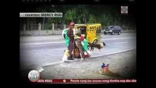 TV Patrol: Lalaki, naglakad ng daang kilometro kaysa iwan ang mga aso