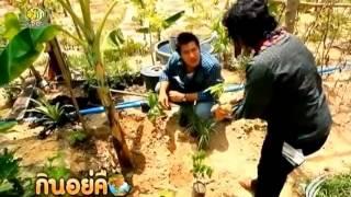 ปลูกพืชปราณีต1ตารางเมตร