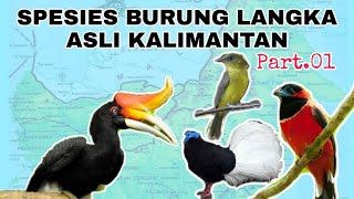 SPESIES BURUNG LANGKA ENDEMIK KALIMANTAN PART.01