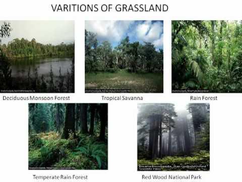 Natural Vegetation And Wildlife Ppt Presentation Free Download