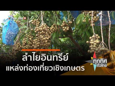 ลำไยอินทรีย์ แหล่งท่องเที่ยวเชิงเกษตร จ.ลพบุรี (1 ก.ค. 63)