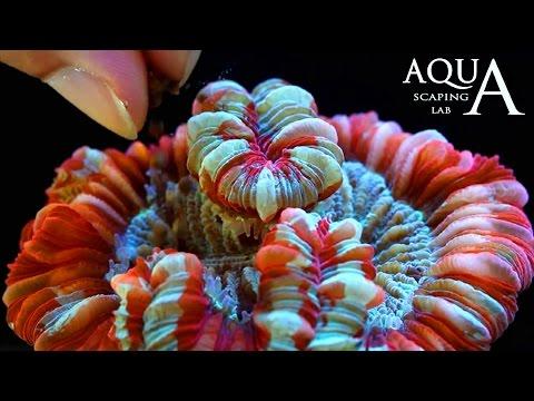 Aquascaping Lab - Alimentazione e mantenimento dei coralli, Zooxantelle e Fitoplancton