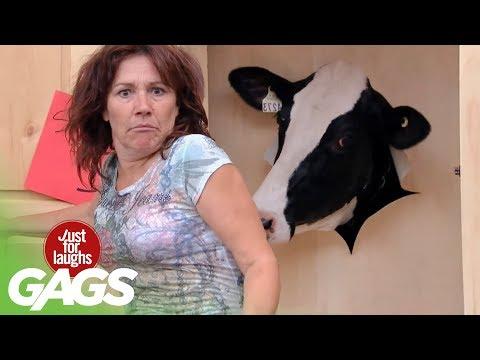 Closet Cow Prank
