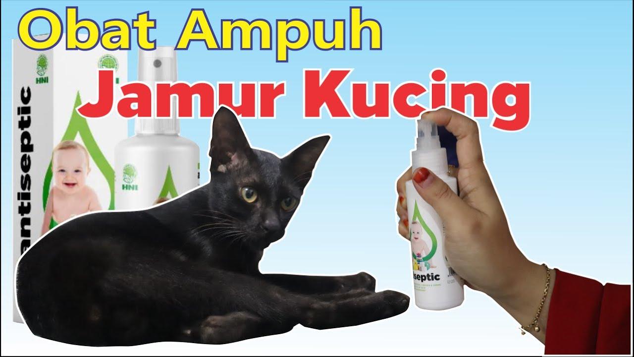 Mengobati Jamur Pada Kucing Dengan Antiseptic Sterilyn Hni Hpai Jamur Pada Hewan Peliharaan Youtube