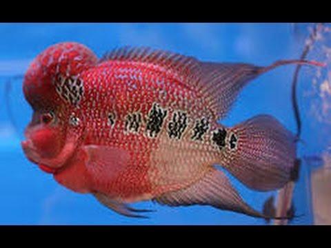 floran fish