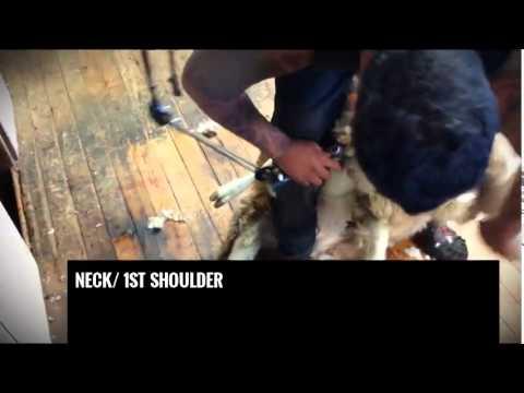 Shearing- keep it simple