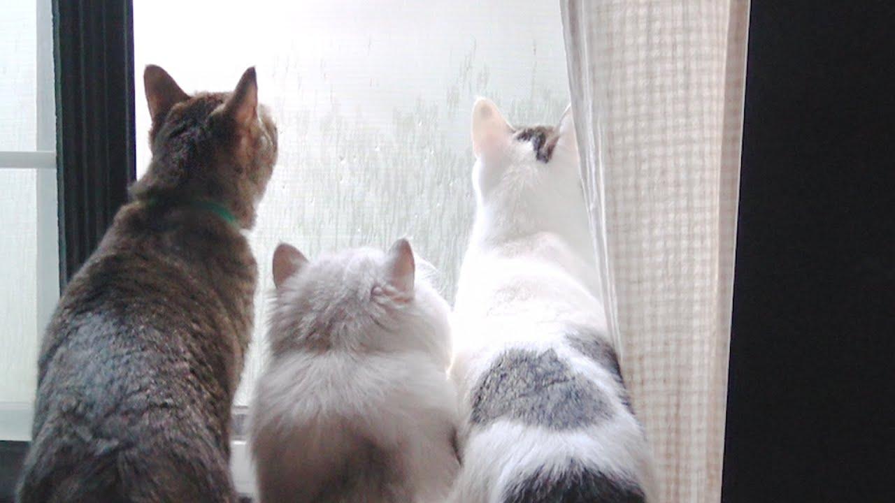 고양이4마리 VS 까마귀