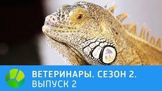 Ветеринары  Кот, нутрия, плюющие кобры, игуана  2 сезон | Живая Планета