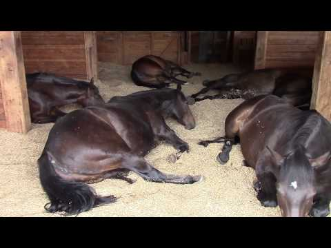 Horses, Peacefully Farting and Snoring