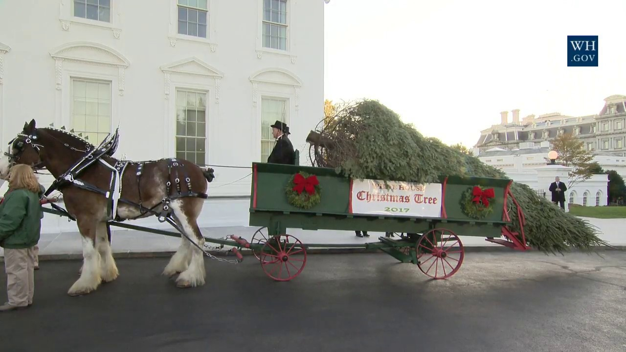 The first lady receives the 2017 white house christmas White house christmas 2017 hgtv