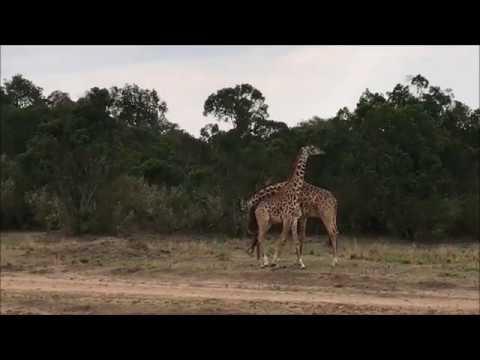 Kenya Travel Video