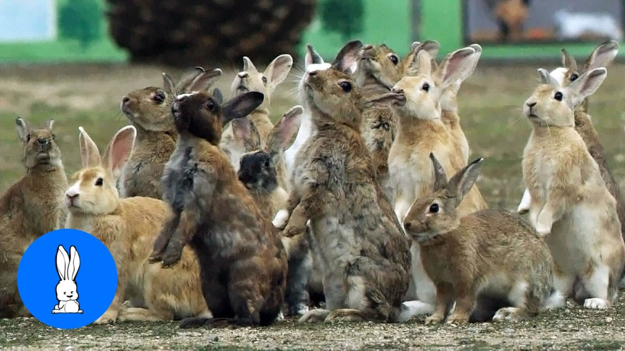 Bunny Rabbit Island Japan Cutest Compilation