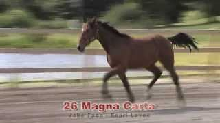 26 Magna Carta