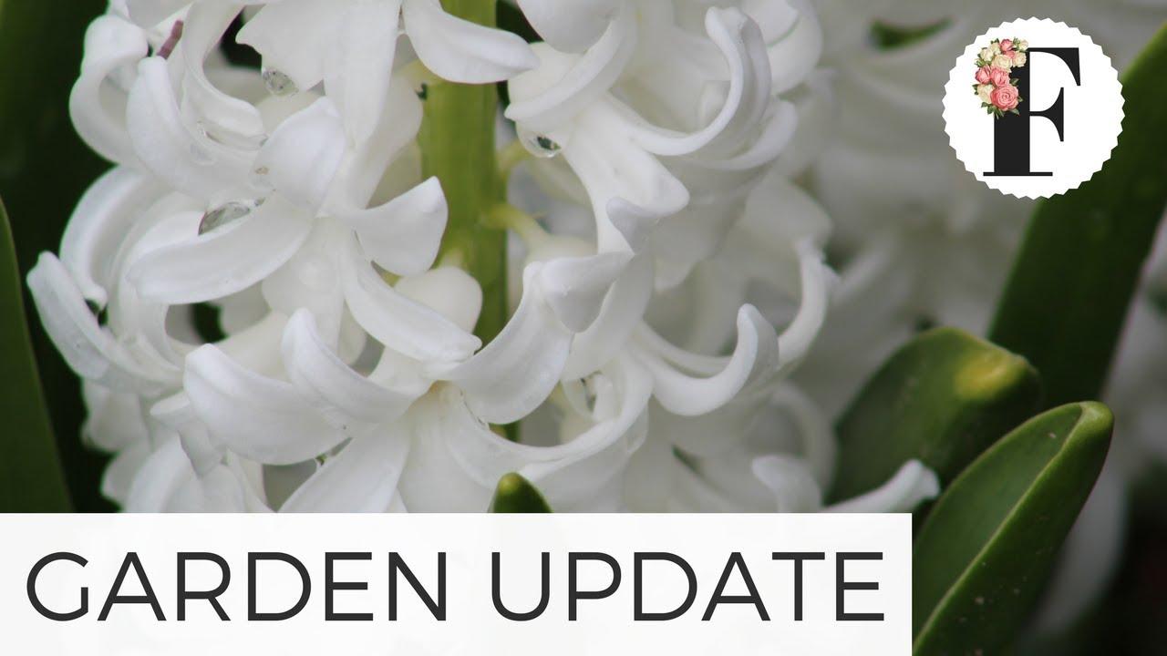 April Week One Garden Update Growing Flowers From Seed Gardening