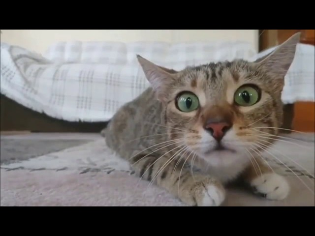 [Z Channel]   Funny Videos   CUỘC SỐNG CỦA BOSS MỀU!!!