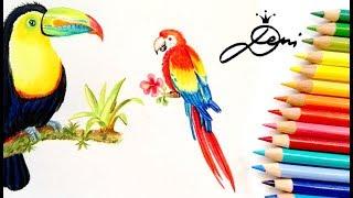 Ara zeichnen lernen 🐦 Papagei malen 🐥 How to draw a Scarlet Macaw 🐦Ara Macao