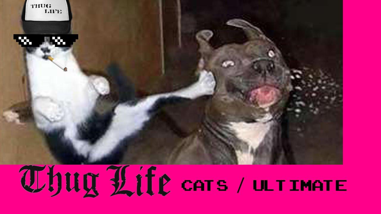 Cat Dog Thug Life