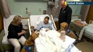 Therapy dogs help Boston victims as they struggle with emotional impact of terror attacks