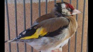 وصفة طبيعية سحرية لتقوية مناعة الطيور