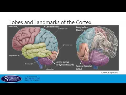 Introduction to the Brain_ Physiology and Pharmacology - Andrew B. Thompson Ph.D.