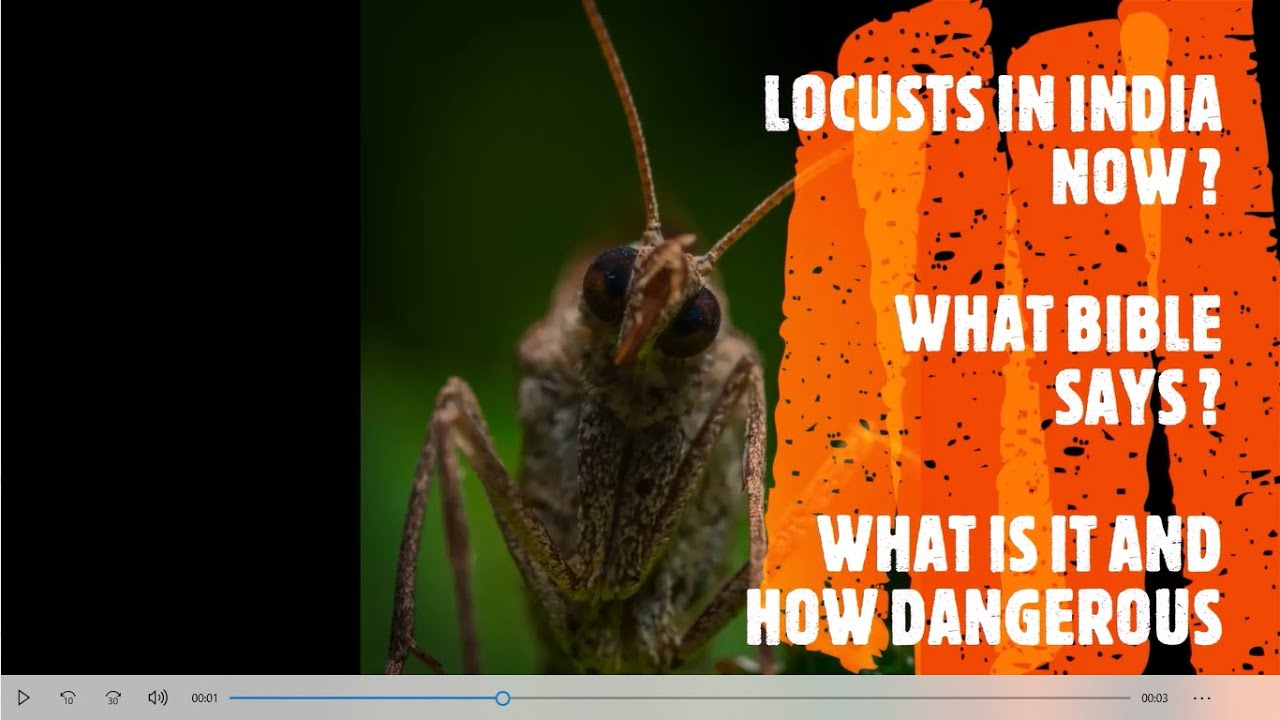 LOCUSTS IN INDIA AND NOW IN? | WHAT IS LOCUST IN BIBLE ...