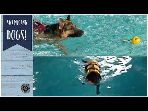 Swimming Dog With Canine Therapies