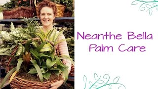 Neanthe Bella Palm: Care tips For This Table Top Palm