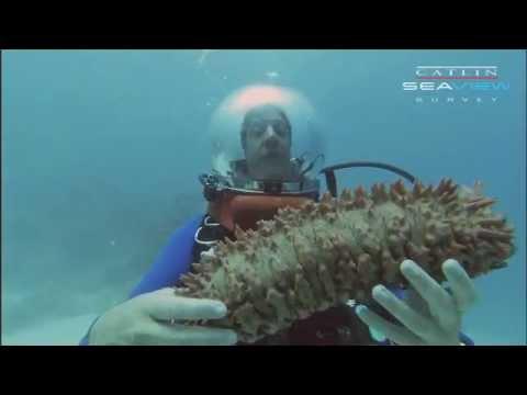 Underwater Classroom: SEA CUCUMBER
