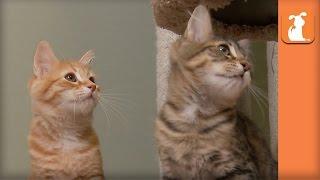 Baby Kittens Battle FEATHER TOY! - Kitten Love