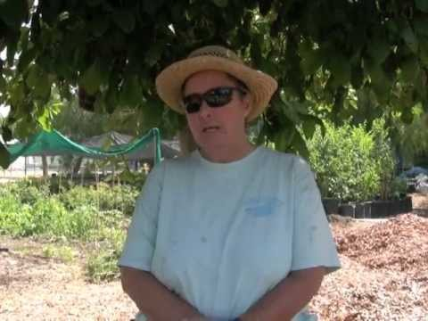 John Muir HS Farm Part 3 - Shirley Barrett Interview