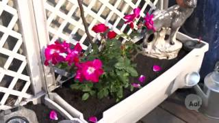 Minute Makeover: Gardening Without Grass