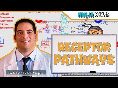Endocrinology: Receptor Pathways