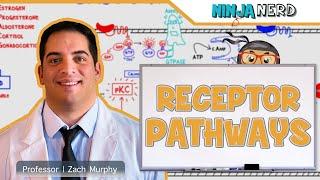 Endocrinology | Receptor Pathways