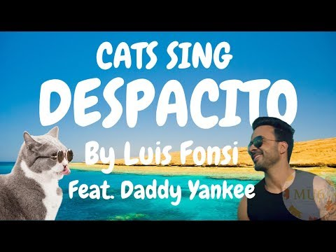 Cats Sing Despacito by Luis Fonsi ft. Daddy Yankee | Cats Singing Song