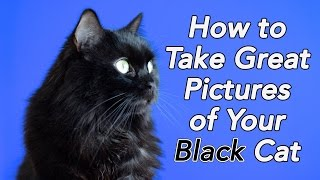 How to Take Great Pictures of Your Black Cat