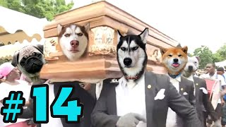 Dancing Funeral Coffin Meme   Dogs and  Cats Version #14