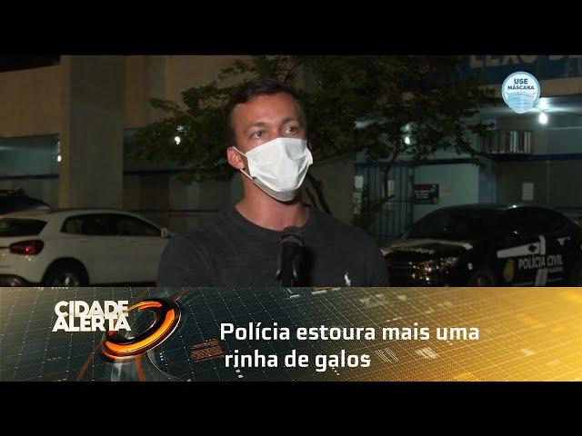 Polícia estoura mais uma rinha de galos