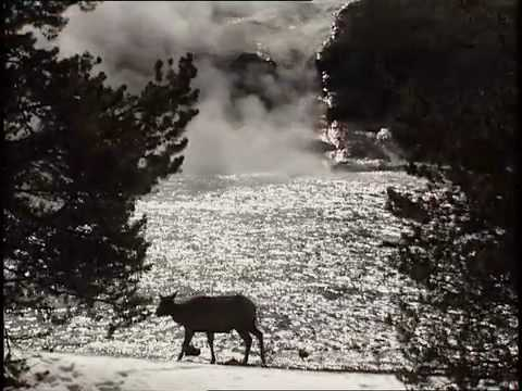 DISCOVER THE WILD, YELLOWSTONE WILDLIFE IN WINTER